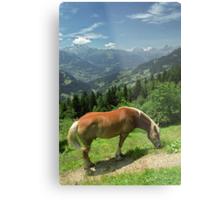 Horse at Kristberg, Austria Metal Print