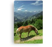 Horse at Kristberg, Austria Canvas Print