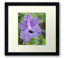 Rare Purple Orchid Framed Print