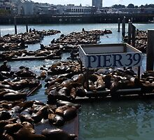 Pier 39 San Francisco Bay by aidan  moran