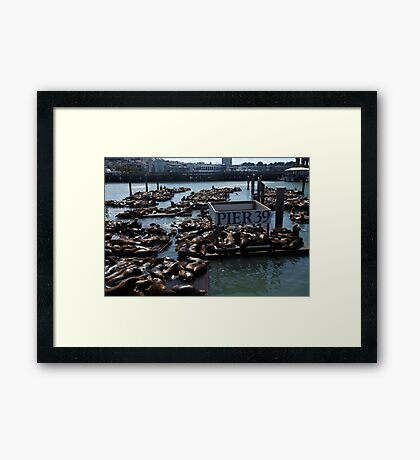 Pier 39 San Francisco Bay Framed Print