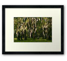 Sunlight Streaming through Spanish Moss Framed Print