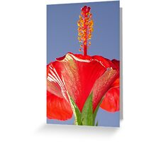 Tropical Red Hibiscus Flower Against Blue Sky Greeting Card