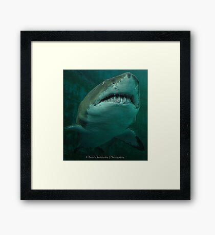 Shark - Pittsburgh Zoo & Aquarium Framed Print