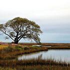 Estuary by SuddenJim
