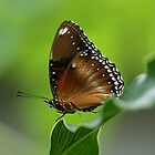 Butterfly by Theo Widharto