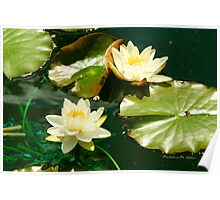 THE LILY POND Poster