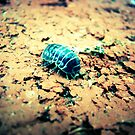 Woodlouse by Danielle Bloxsom