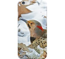 Northern Yellow-Shafted Flicker Woodpecker - Colaptes auratus  iPhone Case/Skin