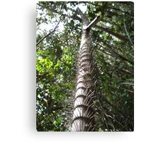 Touch me not! Maliau Basin - Sabah's Lost World Canvas Print