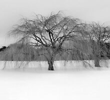 Winter's Coming by SuddenJim