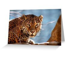 Jaguar His Golden Eyes  Greeting Card