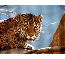Jaguar His Golden Eyes  Photographic Print