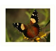 Yellow Admiral  Art Print