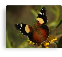 Yellow Admiral  Canvas Print