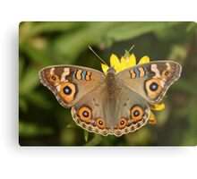 Meadow Argus Metal Print