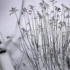 winter garden by Faith Hunter