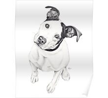Rosco (Pit Mix) Poster