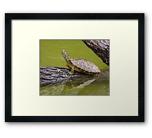 Oh, My Ears Are Burning Framed Print