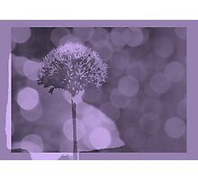 Allium  - JUSTART ©  Photographic Print
