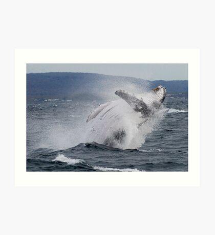 Whales Augusta Art Print