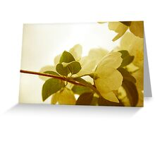 Lightness of Being Greeting Card
