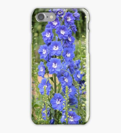 Stalk of Delphiums iPhone Case/Skin