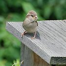 Bird by Vonnie Murfin