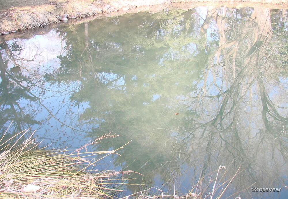 Reflection by tkrosevear