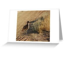 Spotted Thick-Knee Greeting Card