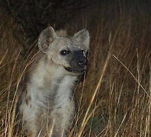 Spotted Hyaena by Hannah Shaw