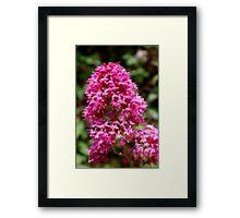 Heart of a flower, #17 Big Sur (softened) Framed Print