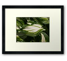 NC greenery. Framed Print