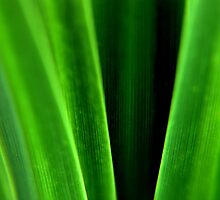 grass by SNAPPYDAVE
