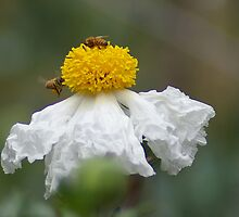 Busy Bees, May 2007 by wonderfulworld