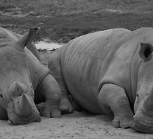 Rhino Love, May 2007 by wonderfulworld