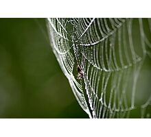 Spider After the Rain Photographic Print