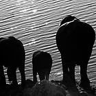 ST0010.Elephants www.tgsdarkroom.com by tgsdarkroom