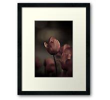Lovely Tulips at night Framed Print