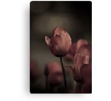 Lovely Tulips at night Canvas Print
