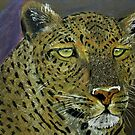 The stare by Susan van Zyl