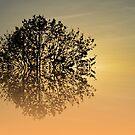 Sunrise by shalisa