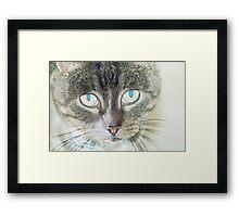 Pencil puss Framed Print