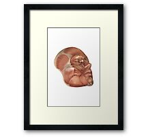 Face Muscles Framed Print