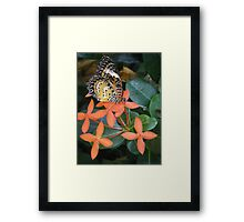 orange butterfly and flower Framed Print