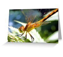 Golden Dragon Fly Greeting Card