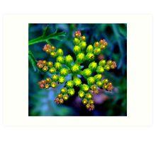 Wild Flower Bud Pre Bloom Art Print