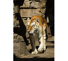 On the Prowl Photographic Print