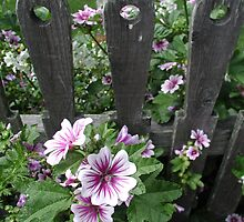 Flowers Along The Fence by Tom  Reynen
