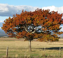 TREE IN AUTUMN by Redlady